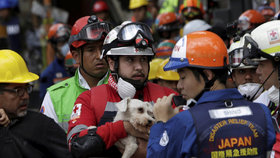 V sutinách po mexickém zemětřesení přežil šest dní malý bílý pejsek.