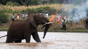 Slon zaútočil na uprchlický tábor Rohingů v Bangladéši.