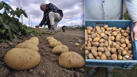 Jak poznat kvalitní brambory? (Ilustrační foto)