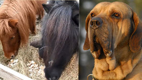 Úředníci se musí postarat o zvířata, která připadnou státu.
