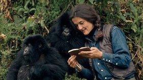 Dian Fosseyová se zasadila o záchranu goril horských.