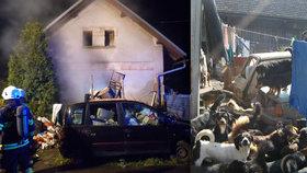 Požár na Jičínsku zabil část psí smečky: Přemnožená zvířata řeší obec už 25 let.