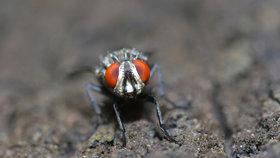 Globální oteplování způsobí, že se přemnoží mouchy. A díky nim přibude případů otrav jídla