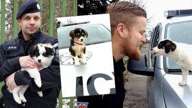 Čeští policisté se vrátili z mise v Makedonii: Sebou si přivezli pár opuštěných štěňat.