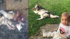 Z milovaného psa jim zbyla jen kůže: V osadě z Niny udělali psí sádlo, policie obvinila 4 muže.