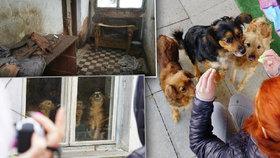 Odsud pochází na kost zmrzlý Radovánek: Ochráncům zvířat bylo po vstupu do domu na omdlení.
