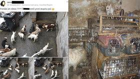 Dům hrůzy na Vysočině: Stovky psů trpěly v klecích plných výkalů, stěny domu byly nasáklé močí.