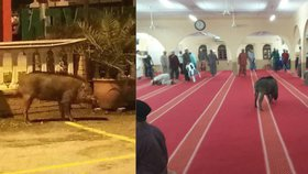 Divočák napadl modlící muslimy v mešitě.