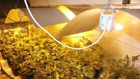 »Zahradník« z Rokycanska pěstoval marihuanu ve vile své příbuzné: Té to řekli až policisté