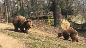 Buzení medvědů ze zimního spánku v plzeňské zoo (ilustrační foto)
