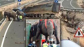 Sloni pobíhali po silnici.