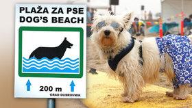 V zahraničí mají psi vlastní pláže
