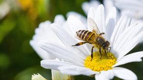 Vědci zjistili, že včely umějí sčítat a odčítat (ilustrační foto)