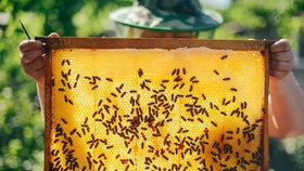Včely umírají a stále se tomu nedaří zabránit. OSN chce věc intenzivně řešit