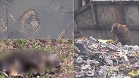 U slovenského města byly nalezeny ostatky uhořelých psů: Mohou za krutou smrt zvířat děti?