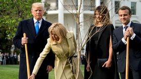 Sázení stromu přátelství během návštěvy prezidenta Macrona v Bílém domě. Dub později ze zahrady zmizel, ocitl se údajně v karanténě.