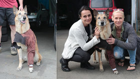 Pes Dingo srážku přežil díky pomoci herců
