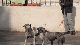 Toulaví psi mohou k šíření nemocí přispět