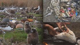Odpadky, zejména plasty, zabíjí v Tichém oceánu tisíce živočichů. Albatrosové plasty loví omylem zaměněné za potravu, krmí jimi i svá mláďata