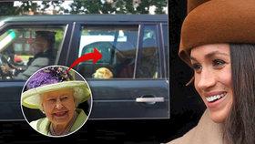 Psa, který sežral občerstvení na hostině Harryho a Meghan, chtěli utratit! Jeho příběh dojímá