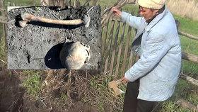 Horor na zahrádce: místo brambor vykopal svého předchůdce