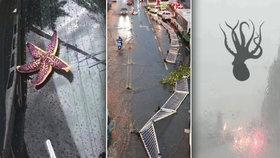 Čínské město zasáhla silná bouře, vítr vyvracel stromy, padaly kroupy a pršely chobotnice.