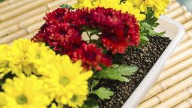 Pěstujte pokojovky i zeleninu bez půdy! Poradíme vám, jak na to!