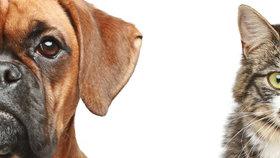 Vědci udělali jasno ve věčném sporu majitelů domácích mazlíčků: Pes je chytřejší NEŽ KOČKA!