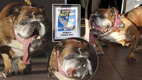 Cenu nejošklivějšího psa vyhrála ZsaZsa.