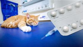 Majitelé krmí kočky antikoncepcí a ibalginem. Může je to zabít, varuje veterinářka