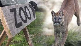 Ze zooparku ve Zvoli u Prahy utekla puma. (Ilustrační foto)