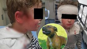 Pes se zakousl chlapci do hlavy (5). Ze sevření čelistí ho vysvobodila jeho máma s tetou