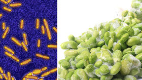 Na český trh se dostala mražená zelenina s podezřením na kontaminaci bakteriemi způsobujícími listeriózu. Prodejci ji nyní ve více evropských zemích stahují z pultů.