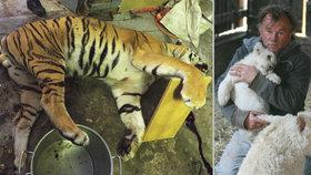 Výnosná jatka u Berouska: Z jednoho tygra bujon za 30 milionů korun!