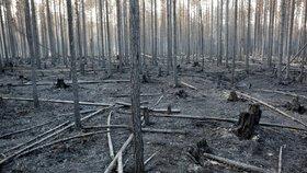 Švédsko sužují lesní požáry, Česko nabízí vrtulník i posádku
