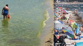 V Baltském moři se příliš daří sinicím: Poláci koupání zakázali, Němci varují