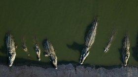 Krokodýlové vyhřívající se na Západním břehu Jordánu.