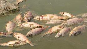 V rybníce Nesyt na Břeclavsku uhynulo v pátek na 40 tun ryb