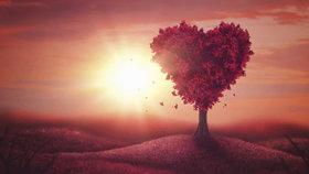 Láska kvete i v zimě