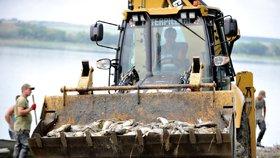 V rybníku Nesyt uhynulo přes 100 tun ryb.