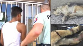 Policisté propustili podezřelého z týrání fenky: Veřejnost se bouří a chce ho lynčovat.