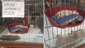 V žilinském supermarketu prodávají štěňata v klecích, další zvířata živoří v akváriích bez čisté vody.