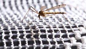 Čecha v Řecku štípl komár přenášející virus západonilské horečky