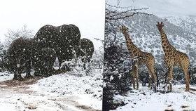 Jižní Afriku zasáhlo neobvyklé množství sněhu