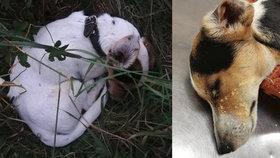 Nechali umírat nemocného pejska, prý protože chtěli ušetřit: Moc trpěl, tvrdí ochránkyně zvířat.
