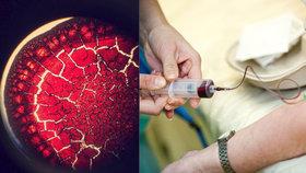 Nebojte se krve a vydejte se do zákulisí laboratoří.