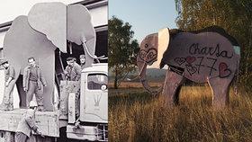 Plechový sloní poutač na Trutnovsku těsně po vyrobení a těsně před odstraněním