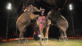 Drezura v cirkusech (ilustrační foto)