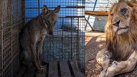 Týraná zvířata v albánské zoo