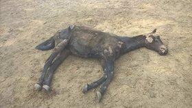 Kriminalisté ze Plzeňska prověřují možné týrání zvířat.